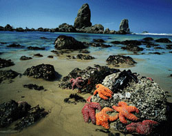 Oregon Coast Tide Pools
